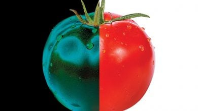 Photo of کاربرد تکنولوژیهای نوین بهنژادی برای تولید میوهها و سبزیجات بهتر