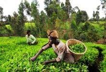 Photo of کشورهای آفریقایی نیازمند کشاورزی اقلیمی هوشمند