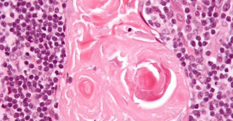 Gut Cells