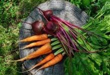 ریشه سبزیجات