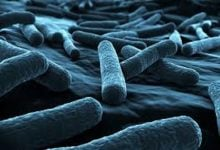 زره باکتریایی هدف جدید آنتیبیوتیکها