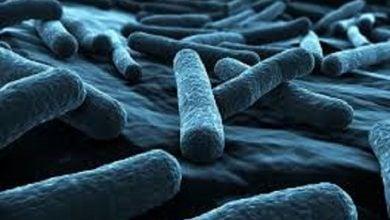 Photo of نقش زره باکتریایی در برابر آنتیبیوتیکها