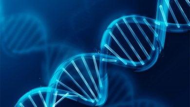 انتقال افقی ژن در یوکاریوتها