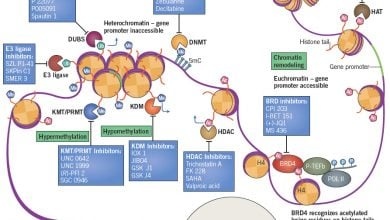 Photo of Epigenetics & Cancer: DNA Modification Impacts