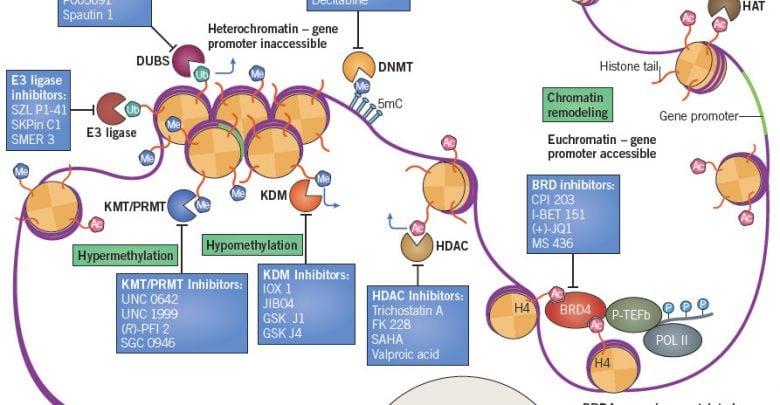 Epigenetics & Cancer