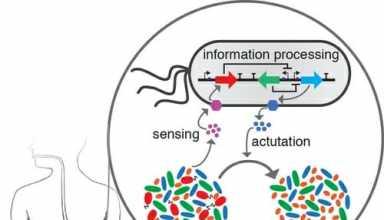 پیشبینی رفتار میکروبهای روده به کمک مدلسازی دینامیک