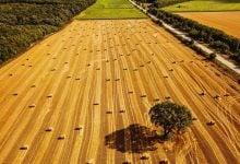 Photo of کاهش جذب دی اکسید کربن با گسترش زمینهای کشاورزی