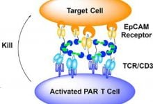 Photo of Eradicating cancer with immune cells armed with nanorings