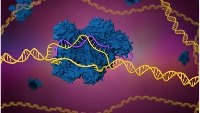 Photo of Researchers discover why the CRISPR gene editing system sometimes fails
