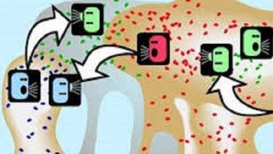 Photo of کشف یافتههای جدید در ارتباطات بین سلولی