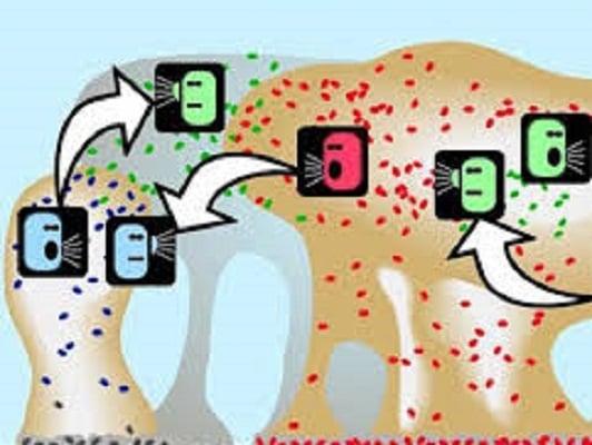ارتباطات بین سلولی