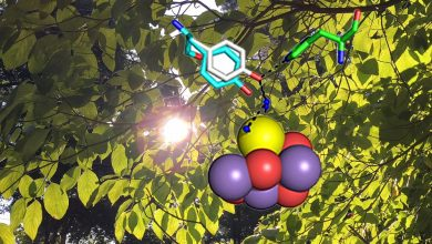 Photo of Making the oxygen we breathe, a photosynthesis mechanism exposed