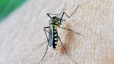Photo of Deadly malaria's evolution revealed