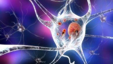 Photo of Aggressive Th17 cells aggravate Parkinson's disease