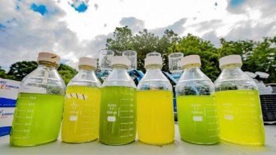 تولید سوخت زیستی از جلبک