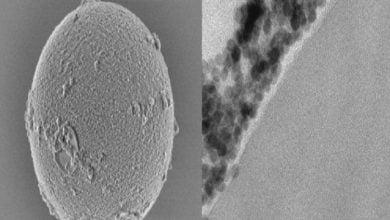 Photo of تولید مداوم میکرولیزر با استفاده از دانههای پوشیده از نانوذرات
