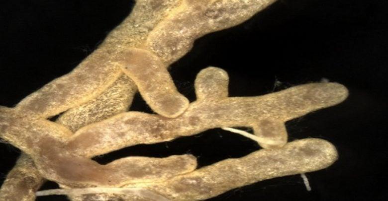 آلودگی محیط و سوءتغذیهی درختان