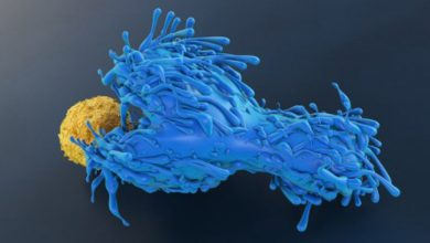 "Photo of ""Public"" T-Cell Receptors From Resistant People Fend Off HIV"
