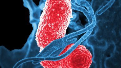 Antibiotic-resistant bacteria