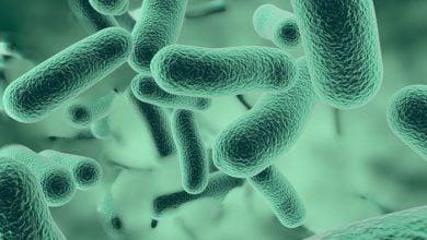 ژنهای مقاومت داروئی مشترک میان باکتریها