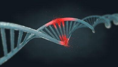 messenger RNAs