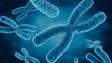 Photo of SMCHD1 protein found essential to X chromosome inactivation