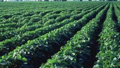 یک تحقیق جدید نشان میدهد که تولید محصولات زراعی فعلی تنها در صورتی میتواند غذای مغذی برای جمعیت پیشبینی شده جهان در سال 2050 را فراهم کند که تغییرات بنیادی در انتخابهای رژیم غذایی ما ایجاد شود.