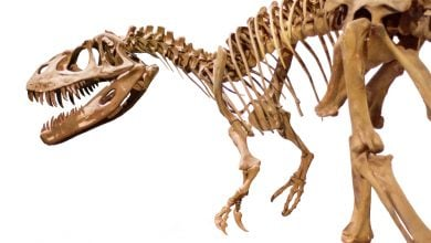 Genome of dinosaurs