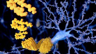 Photo of جهش در پروتئین تاو و سرطان!
