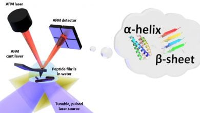 Photo of The shape in water: First nanoscale measurements of biomolecule folding in liquid