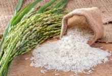 Photo of استفاده از CRISPR برای افزایش بازدهی جذب گیاه برنج