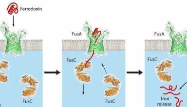 در یک تحقیق جدید، محققان به بینشهای مهمی در مورد مکانیسم زنده ماندن باکتریهایی که موجب پوسیدگی گیاهان خاصی از جمله برخی از علفهای هرز مهاجم میشوند، رسیدند.