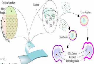 زیست نانوکامپوزیت
