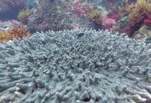 Photo of تأثیر اسیدی شدن اقیانوس بر زندگی دریایی