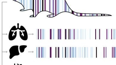Photo of Recording every cell's history in real-time with evolving genetic barcodes