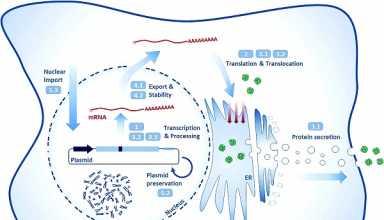 بهبود وکتورهای DNA در ژن درمانی