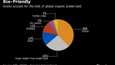 Photo of Kazakhstan Goes Organic in Bid to Build Niche in Grains Market