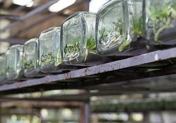 Plant Biotechnology - اخبار زیست فن