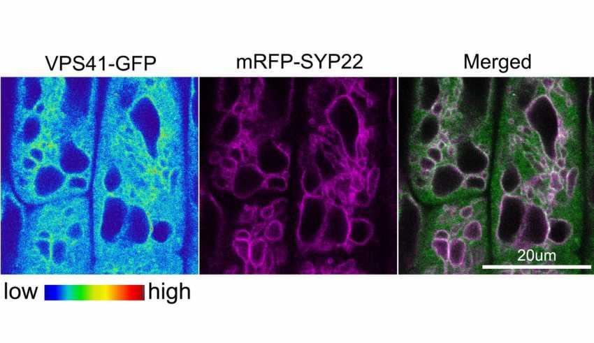 Plant protein complex - اخبار زیست فن