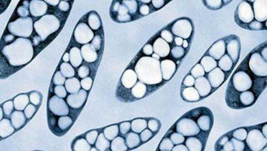 Photo of RESEARCHERS DEVELOP CRISPR-CAS9 EDITING TECHNIQUES FOR RALSTONIA EUTROPHA