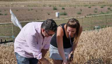 The Hidden Story Of Wheat - اخبار زیست فن