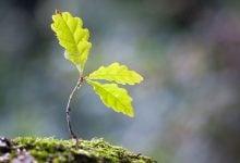 Photo of زمان ۴۸ ساعته زمان دانه پس از تبدیل شدن به گیاه برای تضمین بقاء