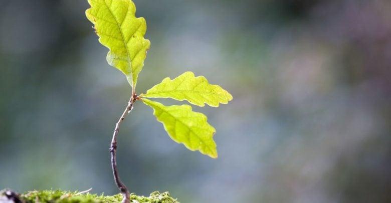 تبدیل شدن به گیاه