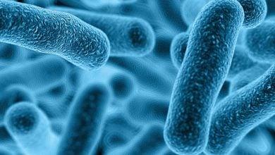 Photo of کشف یک مسیر سیگنالینگ جدید در باکتریها