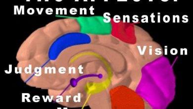 اثرات THC بر سلول عصبی