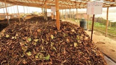 Photo of تبدیل ضایعات گیاهی به محصولات پایدار با کمک آنزیمها