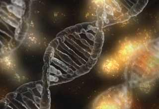 genetic architectures