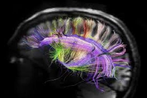 میکروبیوم رودهای و نقش آن در ابتلاء به اوتیسم