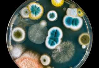 War Between Fungi Bacteria
