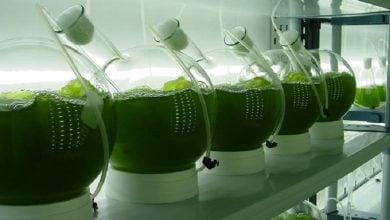 Photo of استخراج با حلال برای محصولات آب دوست و آب گریز ریزجلبک